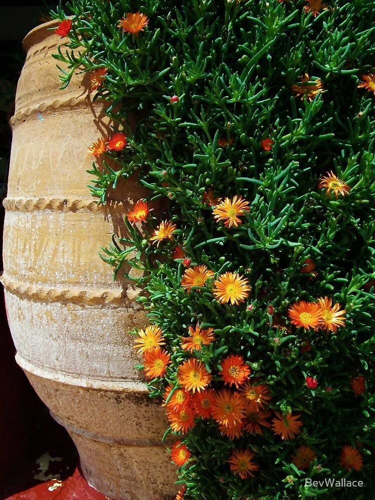 Greek Vase by BevWallace