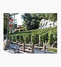 Vineyard California Photographic Print