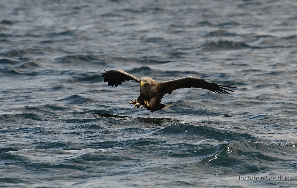 Sea Eagle for Roger..... by Jonathan Goddard