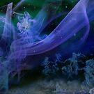 The Night Sky by Igor Zenin