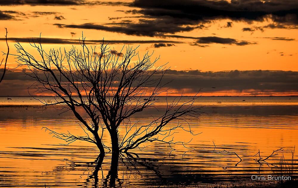 Menindee Orange by Chris Brunton