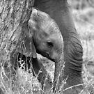 Little one by Tara Pirie