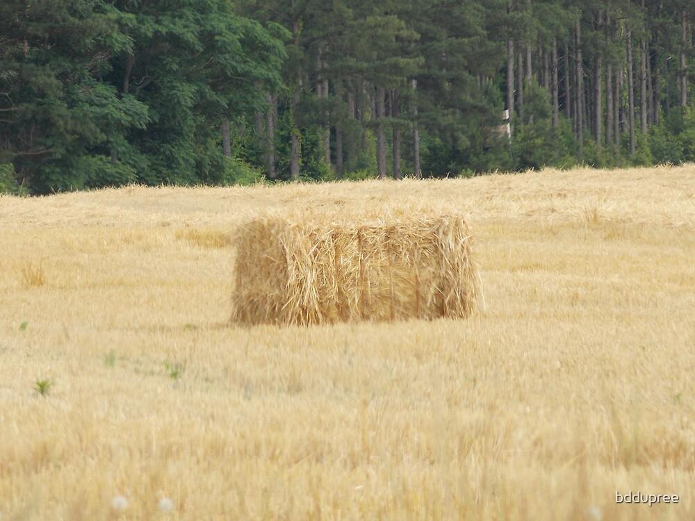 Georgia hay bale  by bddupree