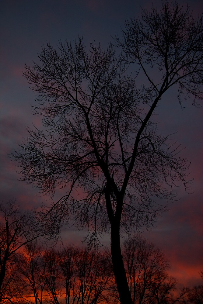 Firery Sunset Tree by Dominic Perry