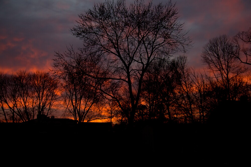 Firery Tree Line by Dominic Perry