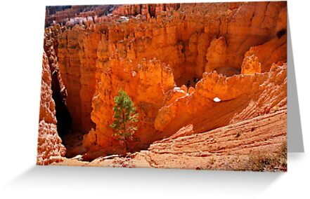 Pines in Bryce Canyon by Oxana Allen