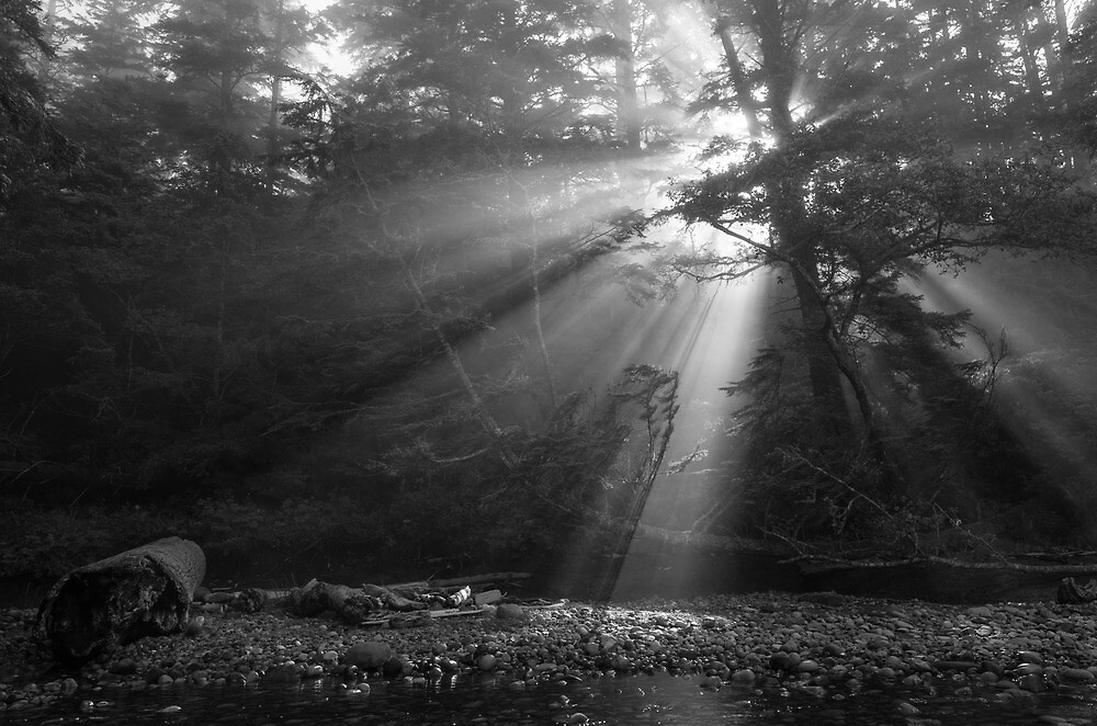 Morning Rays - West Coast Trail, Vancouver Island, Canada by Phil McComiskey