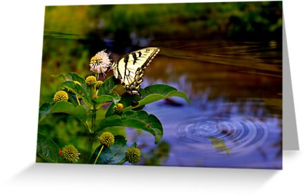 Life in the wetlands (card/print) by Scott Mitchell