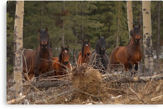 Wild Horses - Ghost Forest by James Anderson