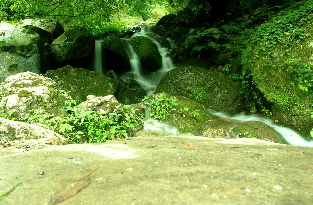 Nature 1 by Dr. Harmeet Singh
