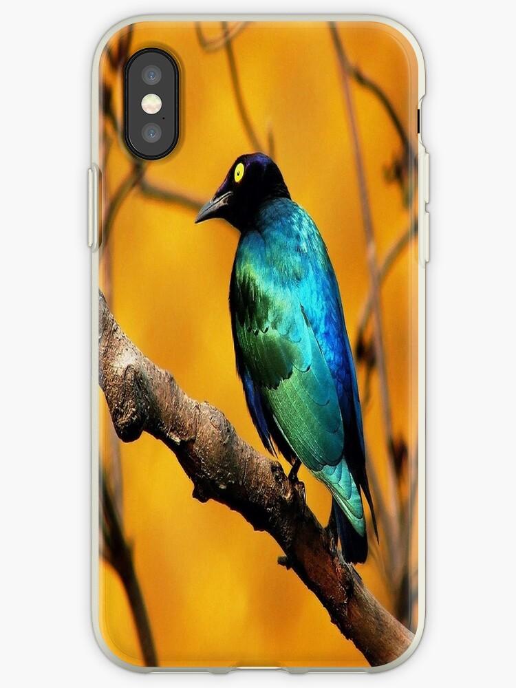 Beautiful Bird by MohsinArain