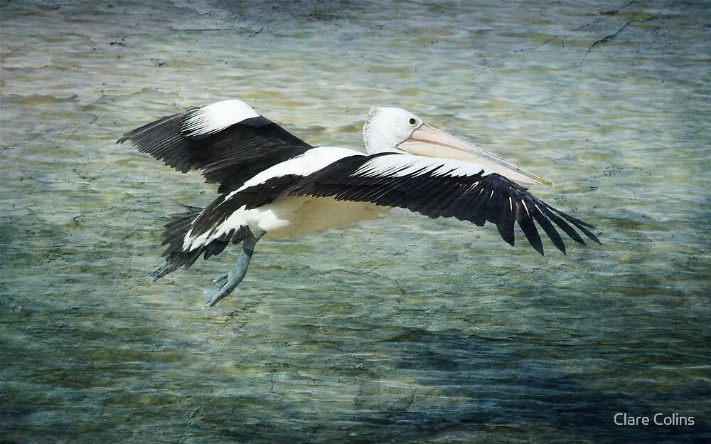 Big Bird Grunge by Clare Colins