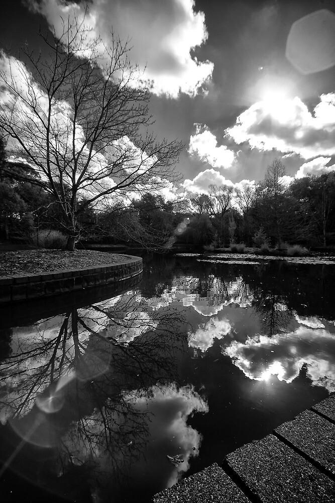 Pond Reflections by photojunk