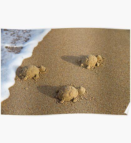 Three Baby Turtles - Wanda Beach - Sydney Poster