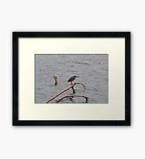 I'm A Green Heron Framed Print