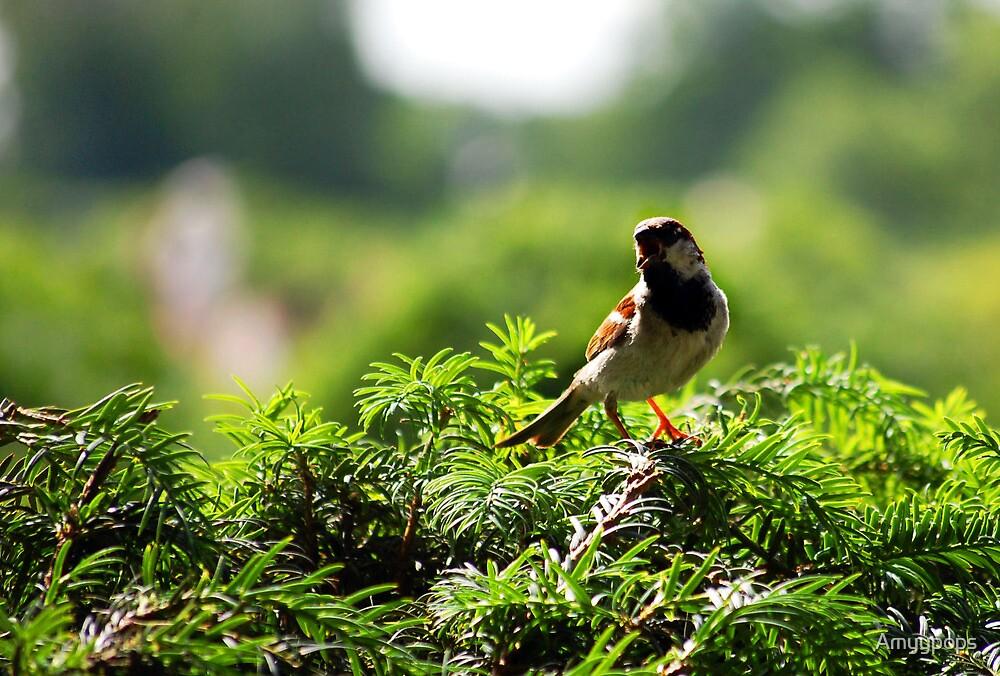 Little Bird by Amyypops