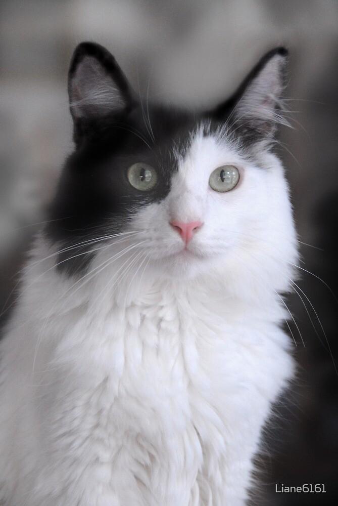 Yin Yang Cat by Liane6161