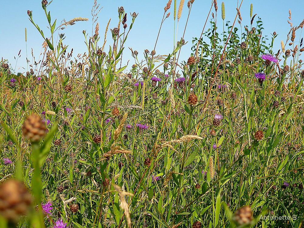 Wild flowers in a meadow by Antoinette B