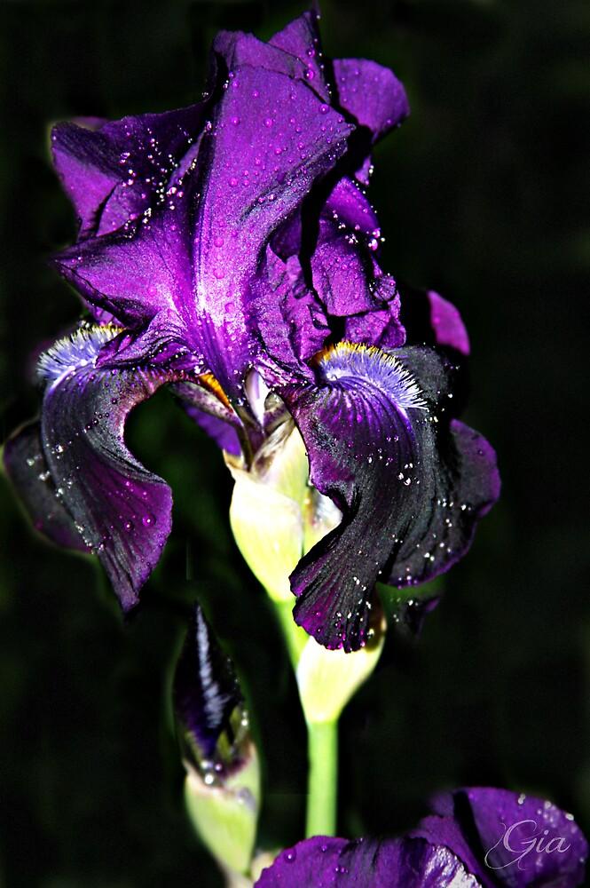 """""""Night Bloom"""" by Gail Jones"""