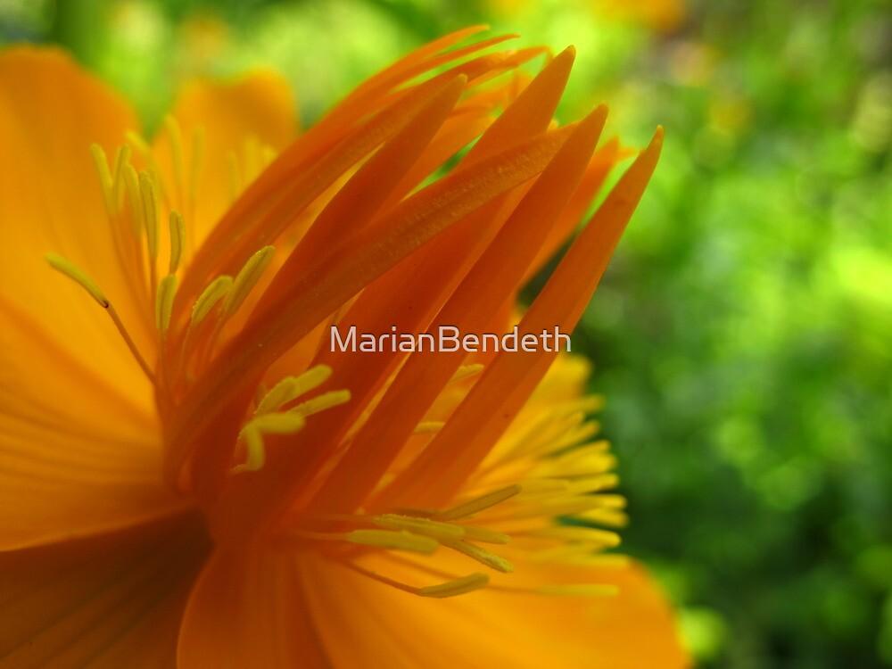 Snappy Orange by MarianBendeth