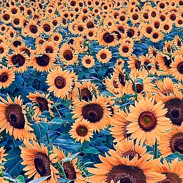 Sunflowers! by Adamsart