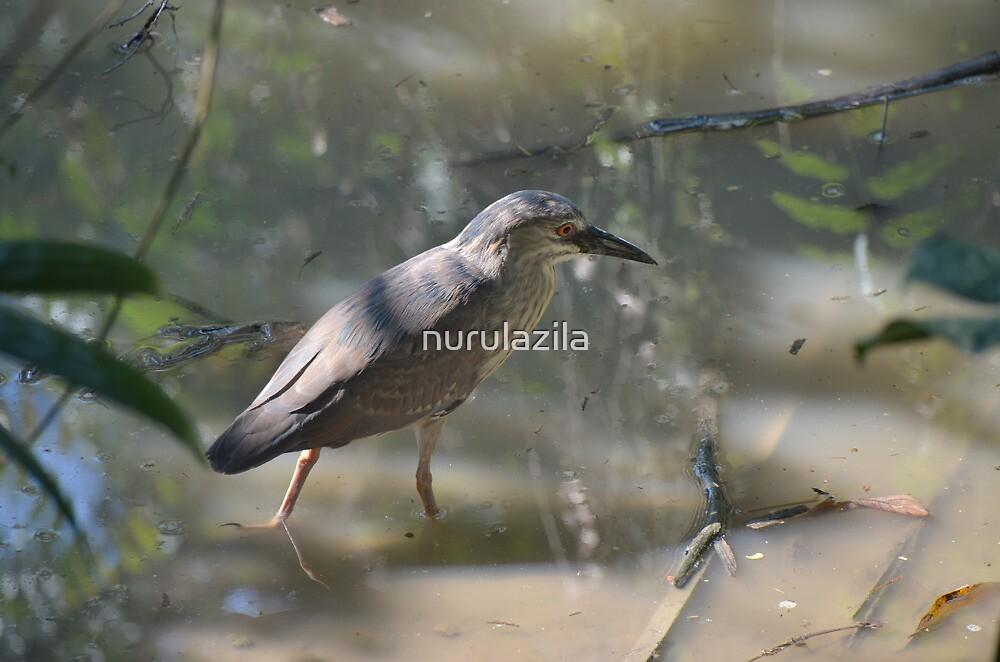 Black-Crowned Night Heron by nurulazila