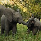 Baby Elephant by Mandy Fell