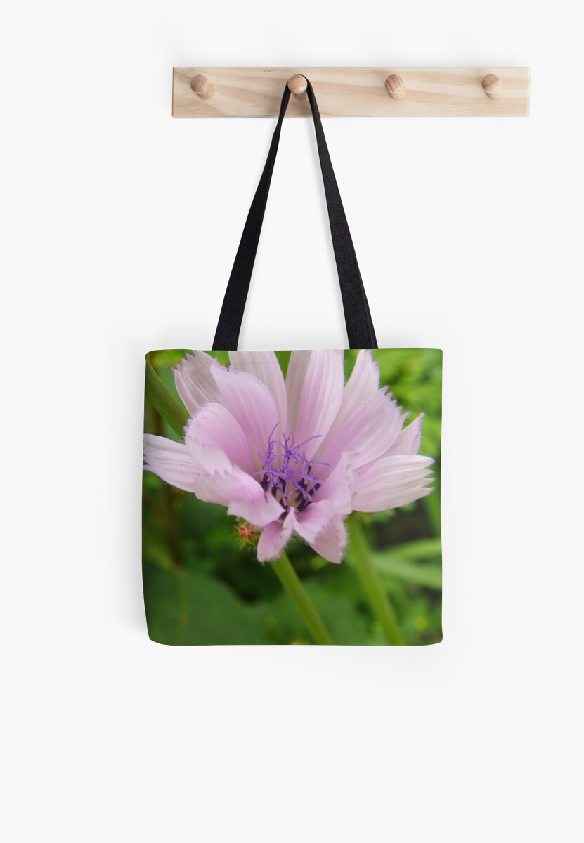 Pink Chicory by PineSinger
