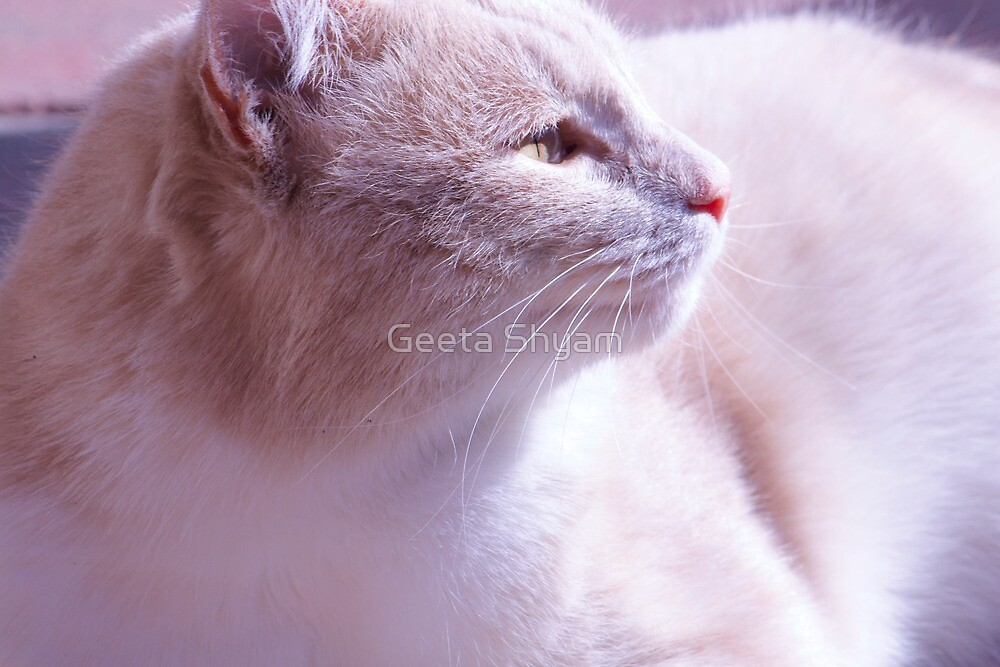 Purring into the distance by Geeta Shyam