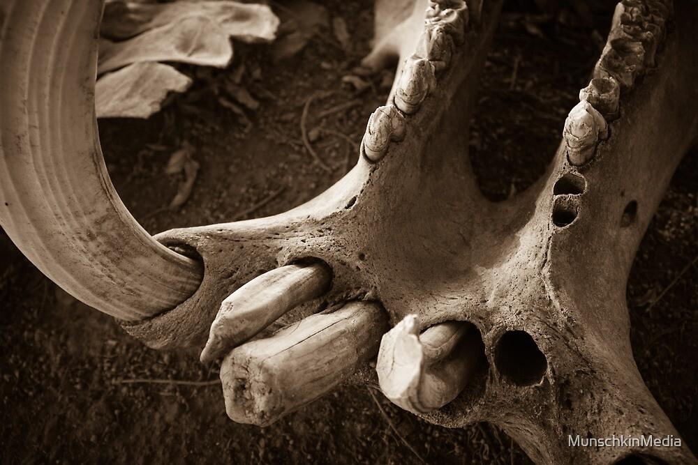 Hippo Skull by MunschkinMedia