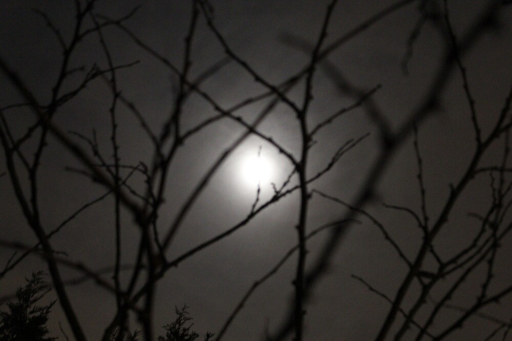 Moonlight through trees by Dominic Perry