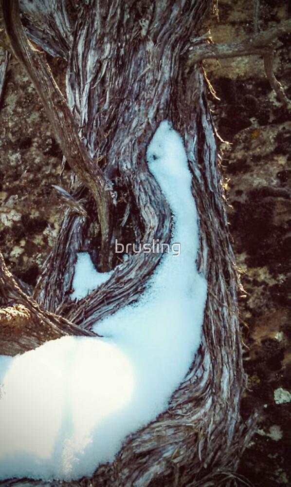 Juniper Tree Study III - Snow by brusling