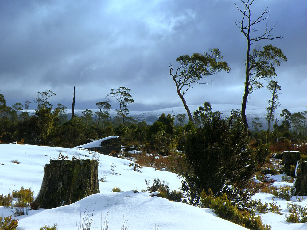 More snow by Elaine Game