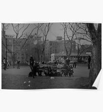 Cadman Plaza Park, Brooklyn Poster