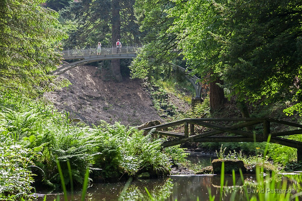 Iron bridge at Cragside Northumberland by David Patterson