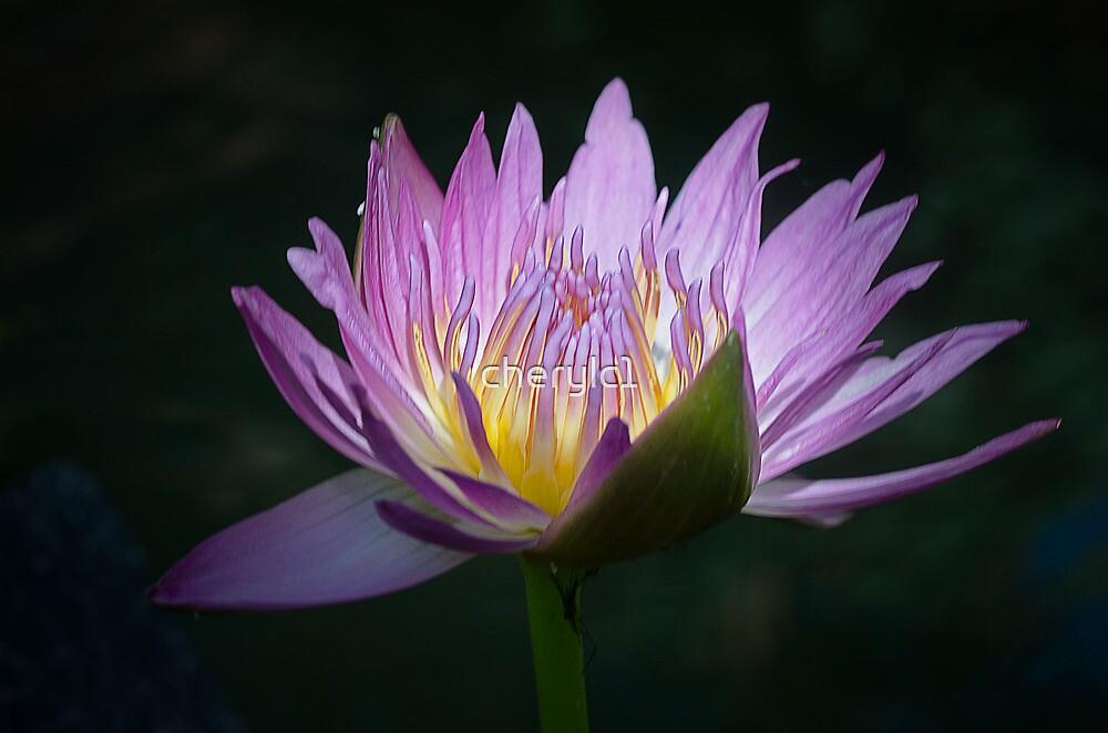 Pretty in Purple by cherylc1