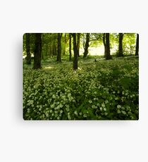 White Carpet Canvas Print