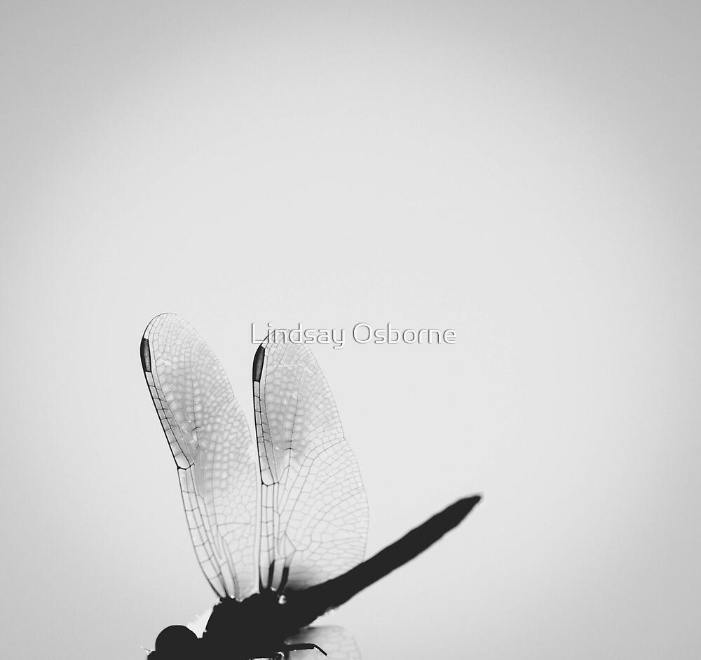 Dragonfly. by Lindsay Osborne