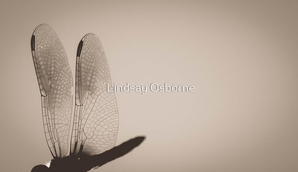 Dragonfly Wings. by Lindsay Osborne