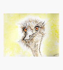 Silly EMU Photographic Print