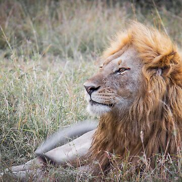 King of the Jungle by MunschkinMedia