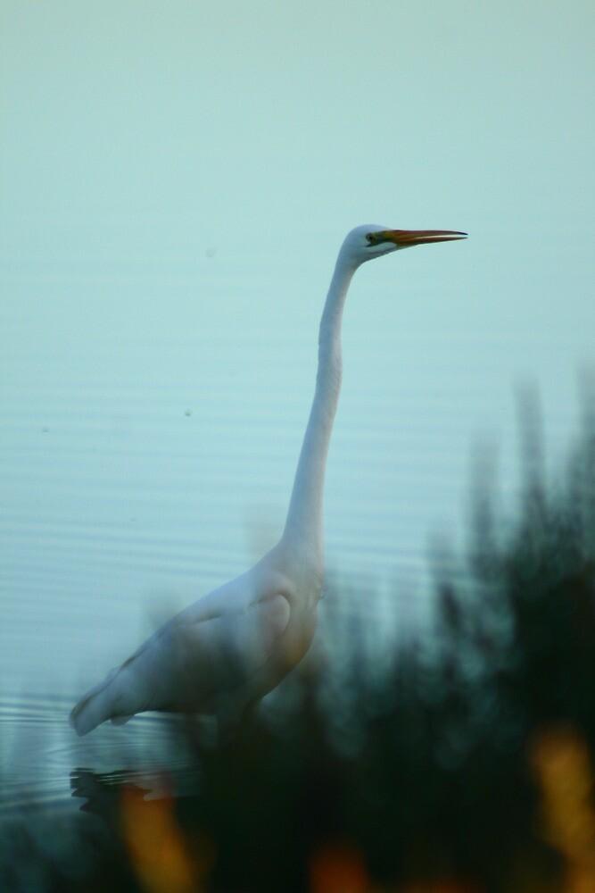 Egret by Joel Mason
