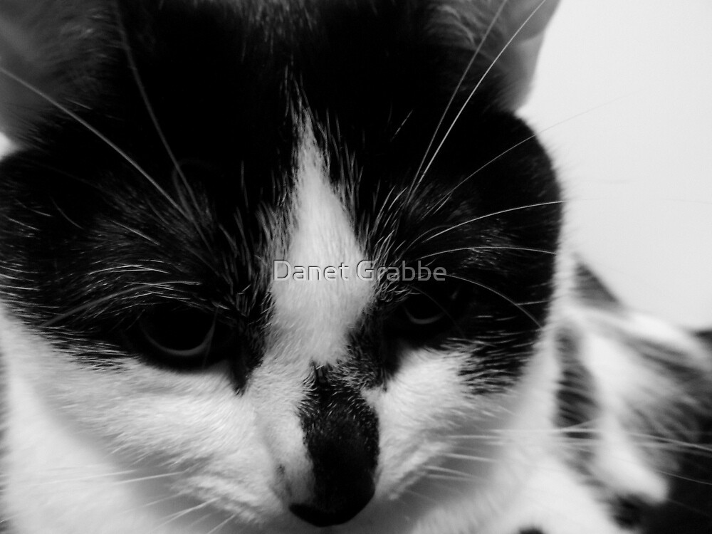 Black and White Cat by Danet Grabbe