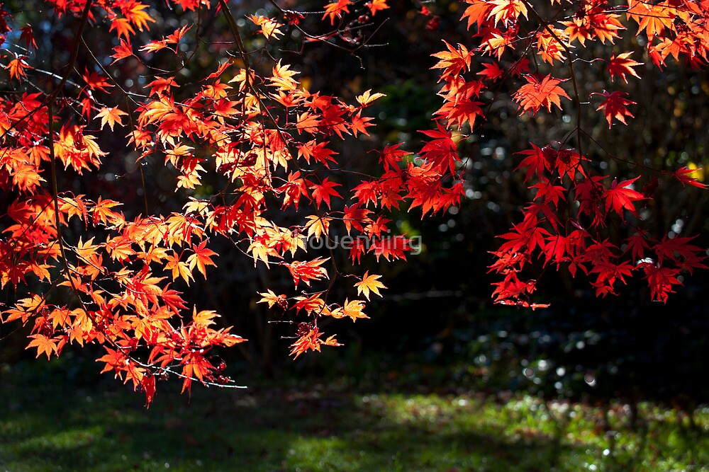 the red leaf by houenying