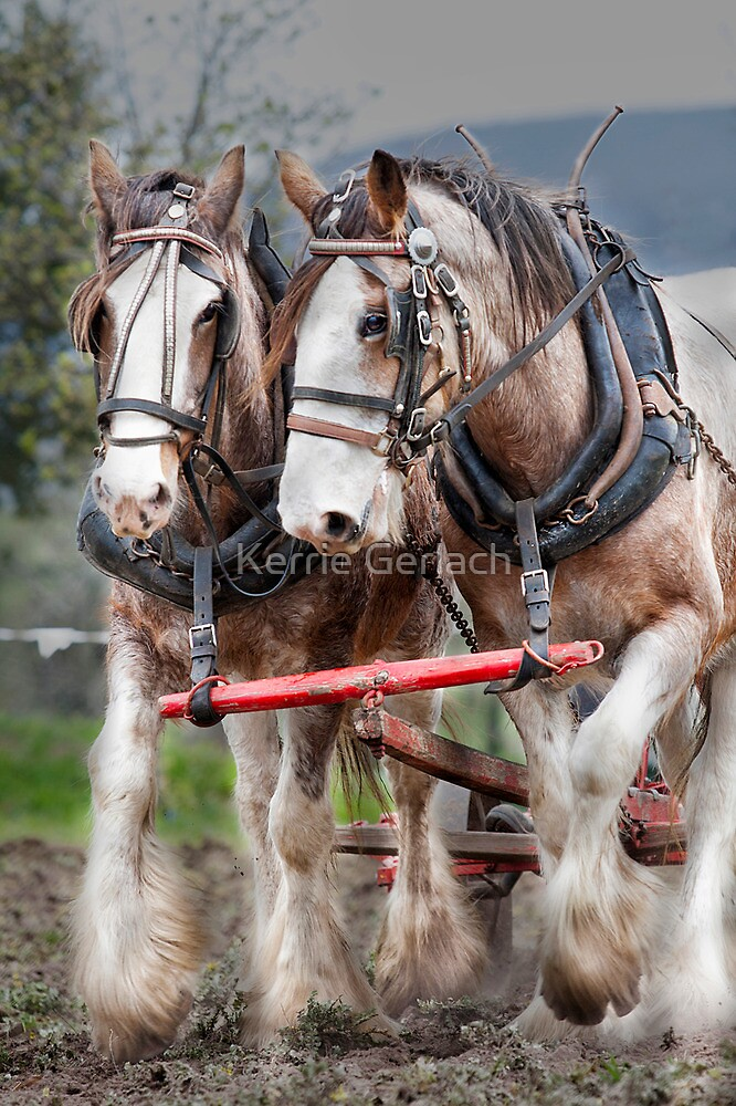 Working Clydes by Kerrie Gerlach