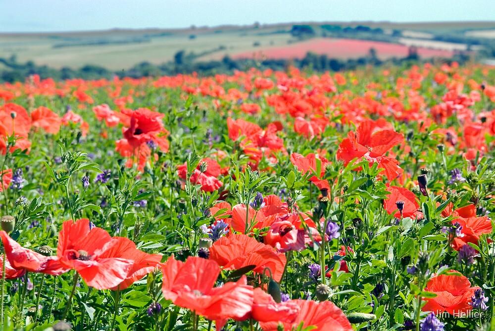 Poppy Fields Compton Berkshire by Jim Hellier