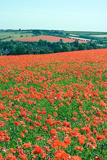 Fields of Poppies Compton Berkshire Compton Berkshire by Jim Hellier
