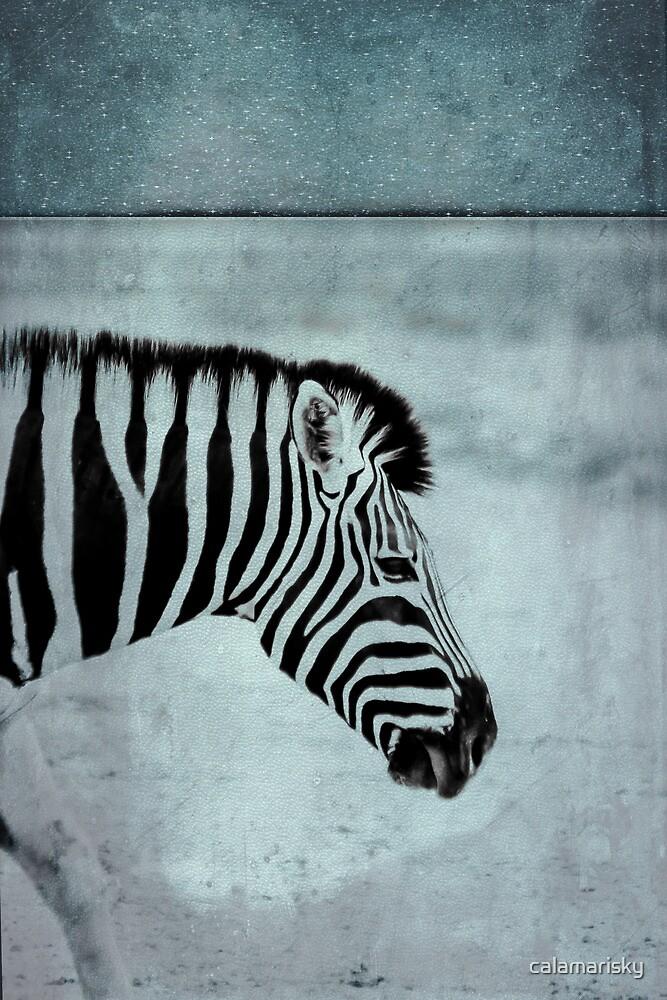 Zebra by calamarisky