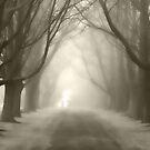 The Light by Steven Gibson