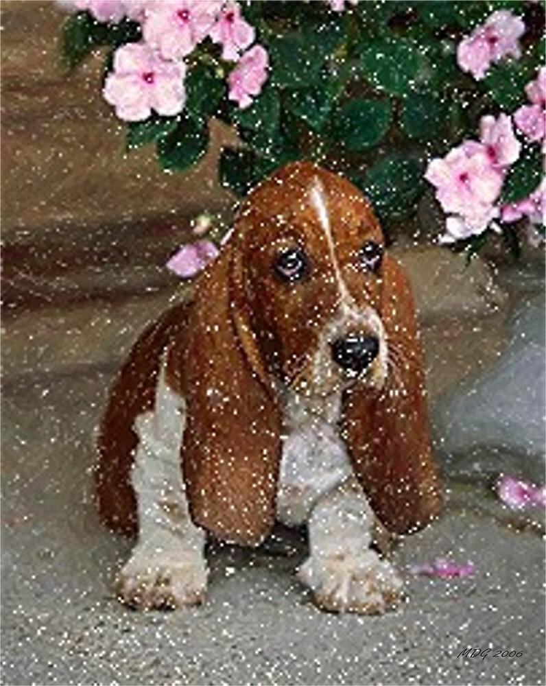 Basset Hound Puppy Dog by Oldetimemercan